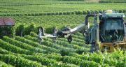 Andermatt, BASF, Belchim, Certis et Jouffray-Drillaud attendent des AMM pour des fongicides en vigne. Photo : N. Chemineau/Pixel image