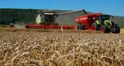 Les récoltes 2018 sont hérérogènes et souvent décevantes en quantité. CP : M.Lecourtier - Pixel Image