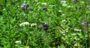 Pour faciliter les discussions sur le nouveau plan pollinisateurs, un comité de pilotage restreint a été nommé. Il réunit les administrations, les fédérations agricoles et les ONG. Photo : S.Bot/Média et Agriculture