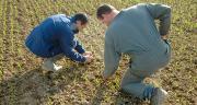 Dans le cadre d'une baisse potentielle des doses de produits phytosanitaires, les agriculteurs comptent avant tout sur les outils de pilotage, un peu moins sur les solutions  de régénération des sols et encore moins sur les solutions de biocontrôle. © O. Lévèque/Pixel image