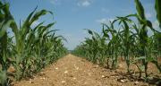 Un des axes de développement est de diminuer les IFT herbicides en maïs grâce au drone. © H. Grare / Pixel Image