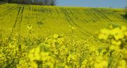 Avril vient de signer un accord avec la société israélienne BioPolymer Technologies pour la création d'une co-entreprise innovante ouvrant de nouvelles voies de valorisation des protéines de colza.