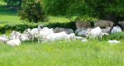 L'Union de coopératives de production et de commercialisation de bovins et de caprins est impliquée depuis plusieurs années dans la réduction de l'empreinte carbone des filières d'élevage. Photo : Feder
