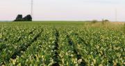 Le projet de loi autorise une dérogation des néonicotinoïdes en traitement de semences jusqu'au 1er juillet 2023. CP : YuricBel/Adobe Stock