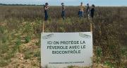 La start'up Agriodor propose une solution de biocontrôle pour lutter contre la bruche des féveroles. Photo : Agriodor