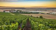 Cérèsia est un groupe coopératif présent sur 8 départements du Nord Est de la France. Le groupe a pour activité principale l'agriculture, la la viticulture, l'élevage et compte de nombreuses filiales. Photo : Hesam Wide Shot