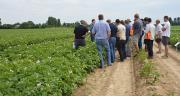 Philagro a présenté ses nouveautés pour la protection contre le mildiou et le rhizoctone brun au cours d'une journée dédiée aux agriculteurs membres du Gitep. Photo : M.Gagneux/Pixel Image