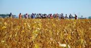 Conviés à la première journée Sojavenir organisée par Vivescia, les adhérents de la coopérative ont découvert l'itinéraire technique du soja. Photo : M. Lecourtier/Pixel image
