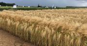 Au travers d'Openfield, Bioline veut proposer un ensemble de solutions pour ouvrir « la 3e voie de l'agriculture ». Photo : Mathieu Lecourtier/Média&Agriculture