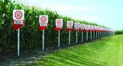 Limagrain représente 32% de parts de marché en maïs fourrage en France. Photo Limagrain