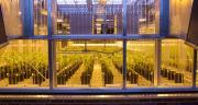 Afin de refléter la nouvelle portée de son activité agriculture, BASF a décidé que sa division « Protection des cultures » s'appellerait dorénavant « Solutions pour l'Agriculture ». Photo : BASF SE