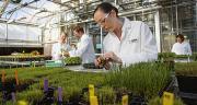 Site de recherche BASF aux États-Unis. Photo : BASF