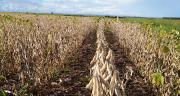 La Table ronde pour le soja responsable encourage des producteurs de soja partout dans le monde à respecter des standards environnementaux et sociaux.