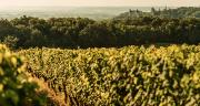 En 2011, la cave des Vignerons de Buzet transmet à ses adhérents une liste positive de produits phyto. Les spécialités sont classées rouge, orange, jaune ou vert suivant leur impact sanitaire et environnemental. ©J. Domec
