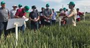 Les 5 000 micro-parcelles des plateformes agroécologiques d'Agora permettent de se positionner notamment sur des problématiques telles que la certification HVE, le label bas carbone, le colza bas GES. Photo : Agora