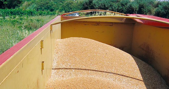 Novagrain affiche un volume de collecte d'été égal à la récolte précédente. Photo : Pixel6TM