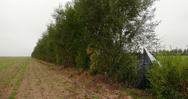 Les projets français de compensation carbone ne se limiteront pas au simple bénéfice carbone. Les entreprises auront la garantie d'un carbone « environné ». Photo : Pixel6TM
