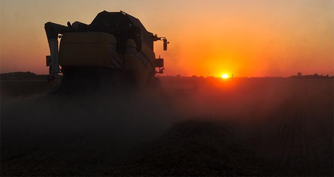 Pour le blé, qui représente 45 % de la collecte de Dijon Céréales, les résultats sont une bonne surprise. Photo : M.Barbier/Pixel6TM
