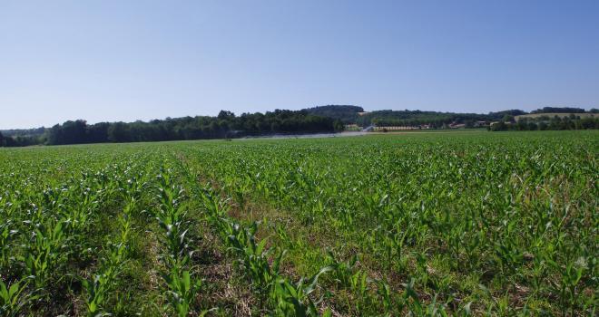 En cas d'implantation de la culture avec un couvert, la principale problématique est la concurrence subie par le maïs sur la ressource en eau. CP : Pixel6TM