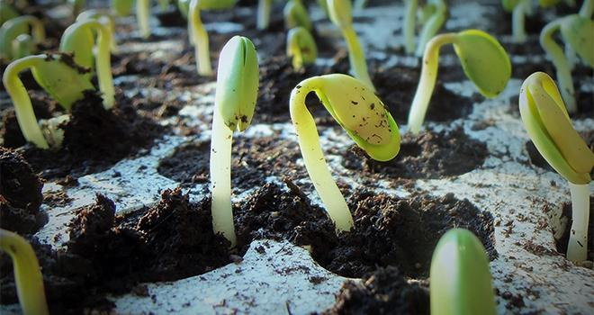 «Notre objectif est d'aider les agrochimistes à trouver le meilleur traitement de semences, précise Edwin Grappin, CEO de Screenseed. Notre démarche est dans la validation de certaines molécules. Ainsi, le traitement est optimisé et cela évite de traiter dans les champs.» CP : DR