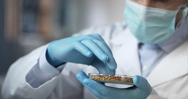 Le débat sur les NBT a progressé en comparaison de celui sur les OGM, selon Claude Tabel. Photo : motortion/Adobe stock