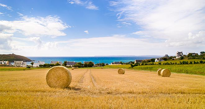 Les récoltes d'orge sont réalisées à 45 % sur l'ensemble de la Bretagne. CP : synto/Adobe Stock
