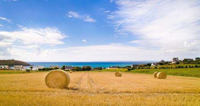 Sur le territoire d'Eureden, le colza pourrait être la bonne surprise de cet été.