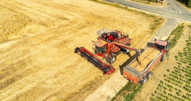 En blé, les premières bennes ont été réceptionnées chez Vivescia dans l'Aube et dans le nord de L'Yonne. CP : Romain Talon/Adobe Stock