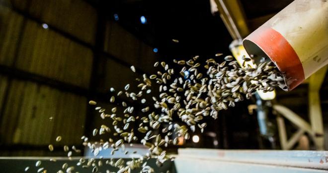 Chez Arterris, des accidents liés au gel provoquent parfois des pertes importantes de rendement. Photo : Arterris