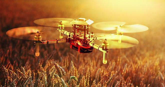 Le projet européen Invite de 8 millions d'euros, animé par François Laurens de l'Inra d'Angers, devrait améliorer sensiblement les conditions de sélection de nombreuses espèces dont le blé. Photo : Ingo Bartussek / Adobe Stock