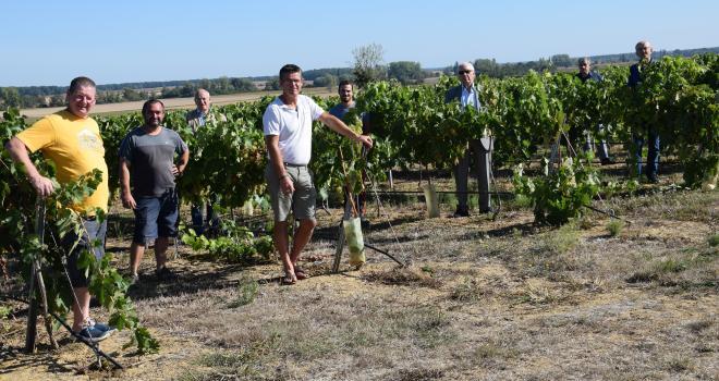 Ce vignoble innovant est le fruit d'une aventure collective entre le négociant Boisset, la coopérative Bourgogne du Sud et neuf agri-viticulteurs du Val de Saône. CP : E. Thomas/Pixel6TM