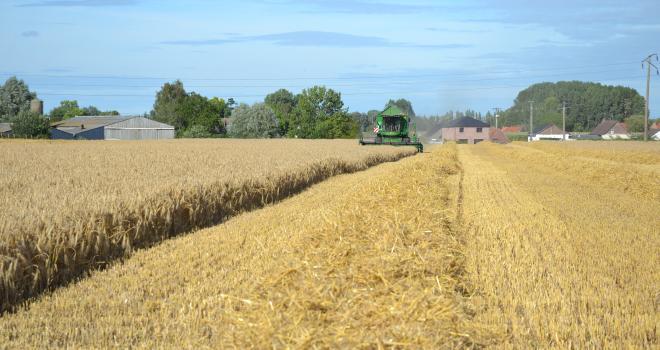En blé, les écarts de rendements sont très marqués au sein de la zone de collecte d'Unéal : de 30 à 130 q. Le rendement moyen est de 89 q. CP : S.Bot/Média et Agriculture